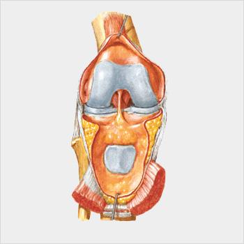 http://www.protesianca.com/wp-content/uploads/2015/11/ginocchio_grigio.jpg